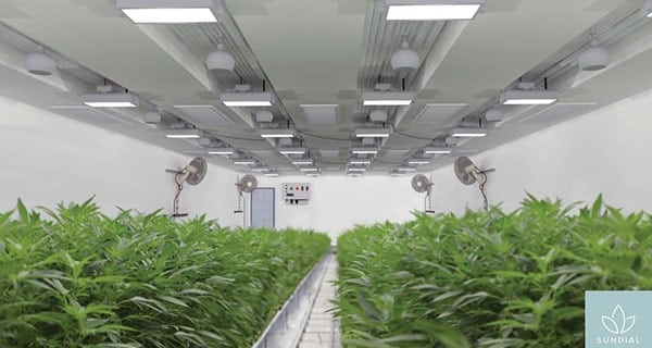 Sundial Growers expanding its Olds cannabis cultivation facility