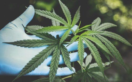 Cannabis real estate buzz falls short in Calgary, Edmonton