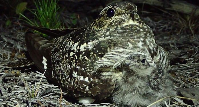 Nationwide citizen science program critical for bird conservation